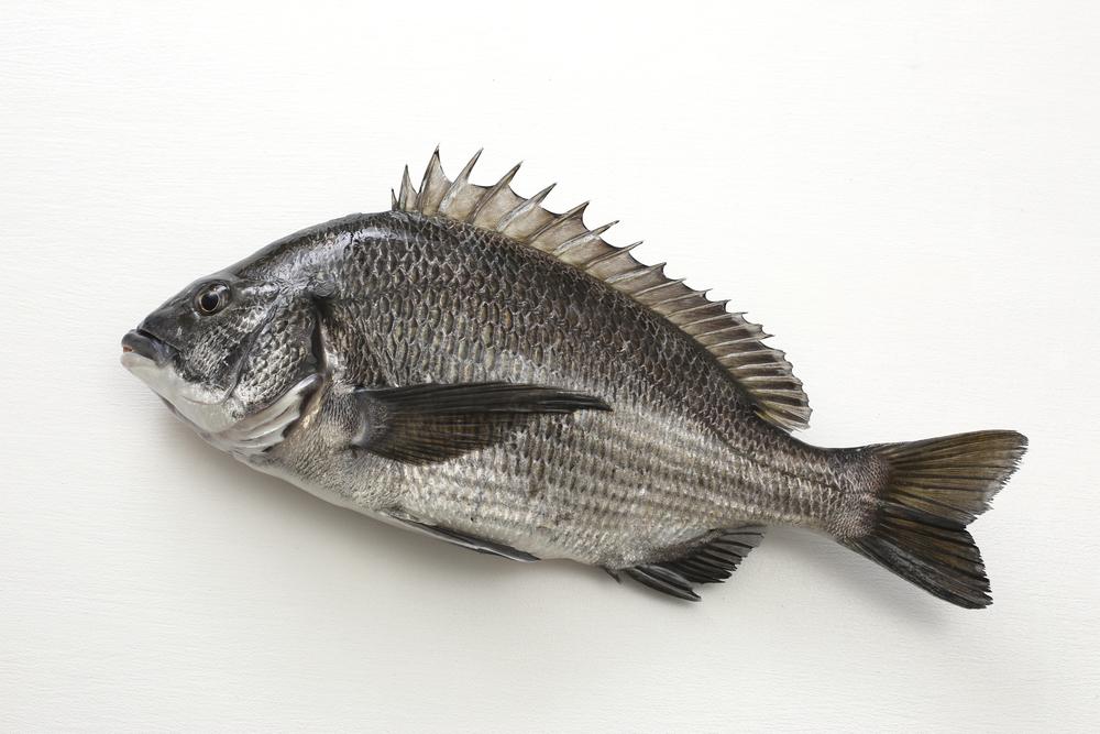 磯釣りでクロダイを釣りたい!はじめての1匹を釣るためのオススメ装備