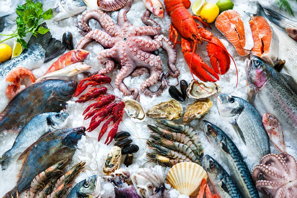 激うま!磯釣りでしか味わえない磯の高級魚3選とその釣り方